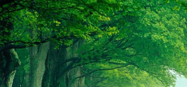 Hoe duurzaam is groen gas?